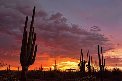 Photograph - Goodnight Tucson by Ryan Seek