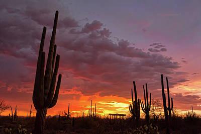 Photograph - Goodnight Tucson by Ryan Seek