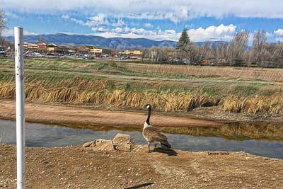 Photograph - Goose - Between A Rock And A Hard Place by Lenore Senior