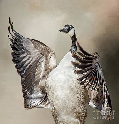Photograph - Goose Chase by Susan Warren