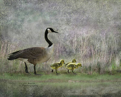 Photograph - Goose Family By Lake by Jill Monroe