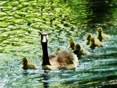 Geese Photograph - Goose Family by Susan Savad