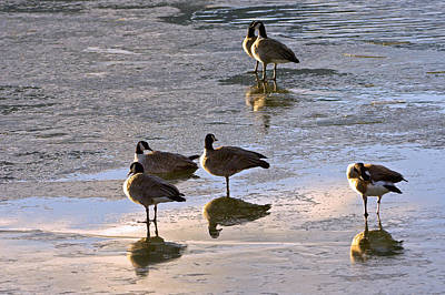 Photograph - Goose Ice Refections by James Steele