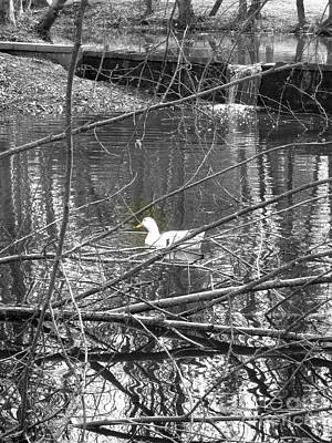 Photograph - Goose In Virtual Black And White by Marie Neder