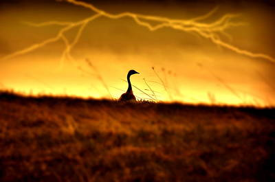 Photograph - Goose N Lightning by Emily Stauring