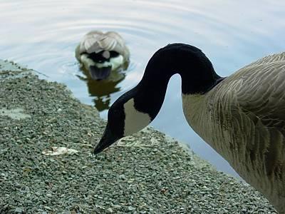 Photograph - Goose Neck by Sara Stevenson