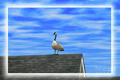 Photograph - Goose On Roof by Donna Munro