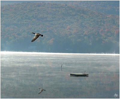 Photograph - Goose Over Stinson Lake by Wayne King