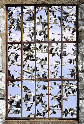 Goose Pond Art Print by Michael J Samuels