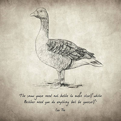 Drawing - Goose Quote By Lao Tzu by Taylan Apukovska