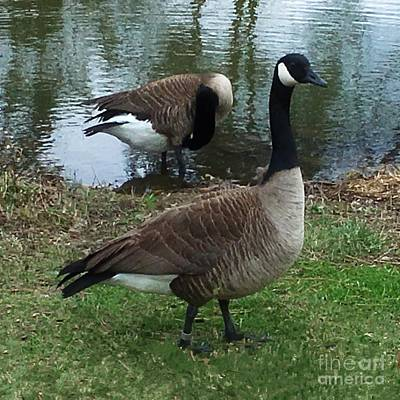 Digital Art - Goose Standing Guard by Luther Fine Art
