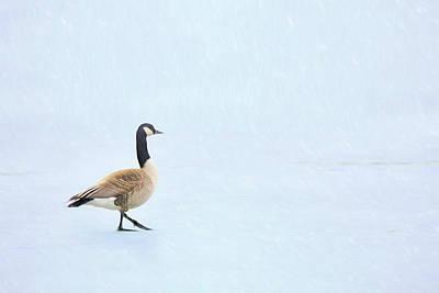 Photograph - Goose Step by Nikolyn McDonald