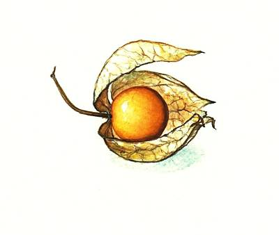 Gooseberry Art Print by Heidi Kriel