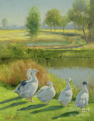 Gooseguard Art Print by Timothy Easton