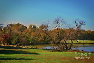 Photograph - Goose's Rest by Skip Willits