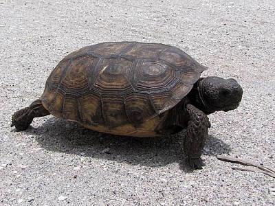 Photograph - Gopher Tortoise  001  by Chris Mercer