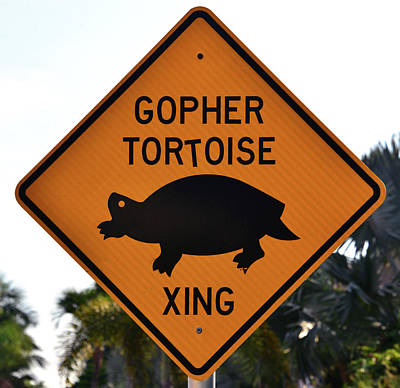 Photograph - Gopher Tortoise Crossing Sign by David Lee Thompson