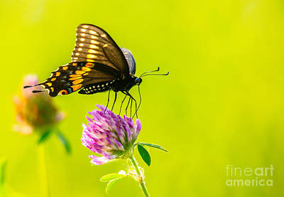 Photograph - Gorgeous Butterfly by Cheryl Baxter