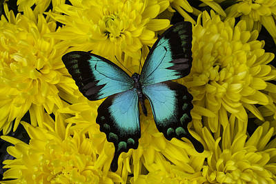 Gorgeous Butterfly Art Print by Garry Gay
