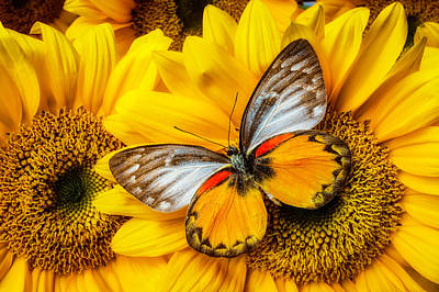 Butterfly Photograph - Gorgeous Butterfly On Sunflowers by Garry Gay
