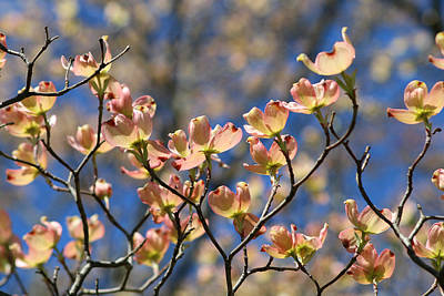Photograph - Gorgeous Dogwood by Living Color Photography Lorraine Lynch