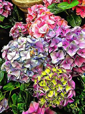 Photograph - Gorgeous Hydrangeas 1 by Dorothy Berry-Lound