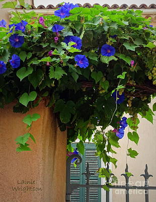 Photograph - Gorgeous Morning Glories And Grapes by Lainie Wrightson