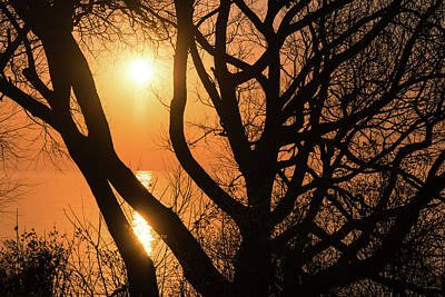 Photograph - Gorgeous Morning Through The Tree Screen by Georgia Mizuleva