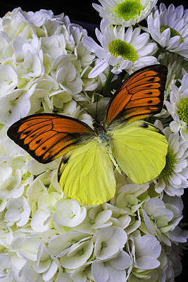 Gorgeous Orange Yellow Butterfly Print by Garry Gay