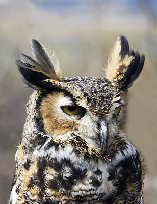 Gorgeous Owl At The Reservoir Art Print