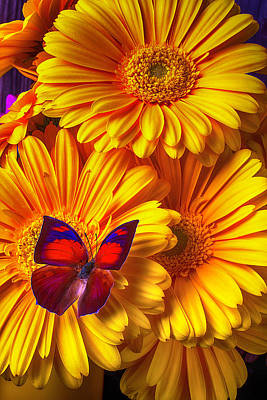 Gerbera Daisy Photograph - Gorgeous Red Brown Butterfly by Garry Gay