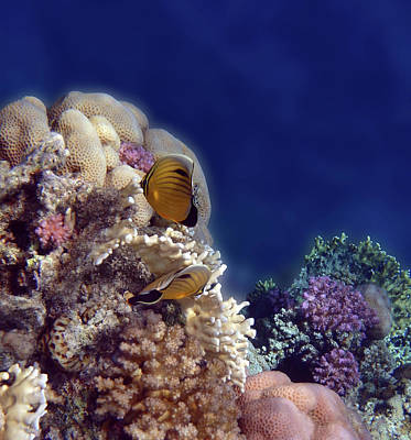 Photograph - Gorgeous Red Sea Underwater World 3 by Johanna Hurmerinta
