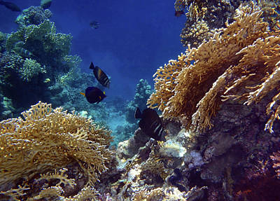 Photograph - Gorgeous Red Sea World 10 by Johanna Hurmerinta
