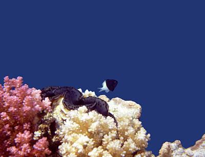 Photograph - Gorgeous Red Sea World 4 by Johanna Hurmerinta