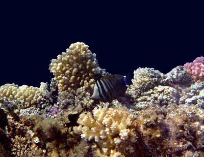 Photograph - Gorgeous Red Sea World 9 by Johanna Hurmerinta