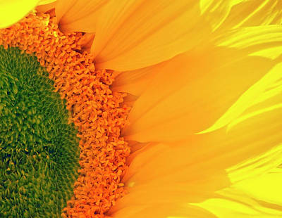 Photograph - Gorgeous Sunflower Macro by Johanna Hurmerinta