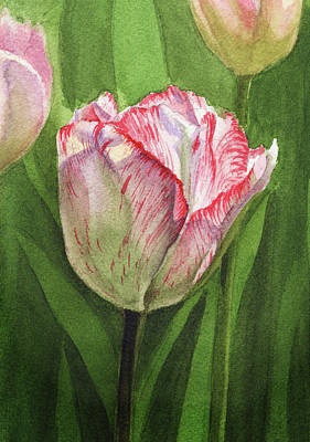 Tulips Watercolor Wall Art - Painting - Gorgeous Tulip Watercolor Realism  by Irina Sztukowski