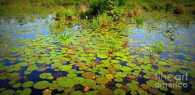 Gorham Pond Lily Pads Art Print