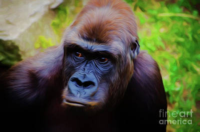 Photograph - Gorilla 19318 by Ray Shrewsberry