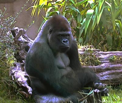 Digital Art - Gorilla Close Up by Barbara Snyder