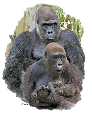 Photograph - Gorilla Family Portrait by Larry Linton
