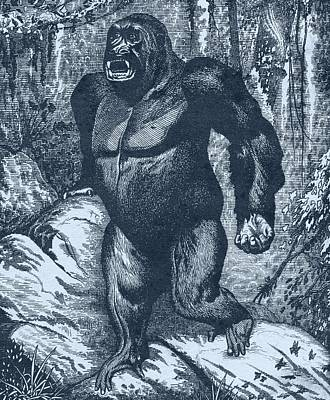 Aggressive Drawing - Gorilla. From Los Animales Del Universo by Vintage Design Pics