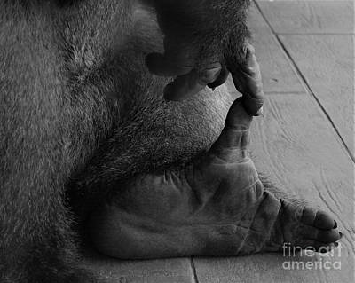 Photograph - Gorilla Hand And Foot by Paulette Thomas