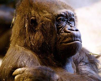 Gorilla Headshot Art Print by Sonja Anderson