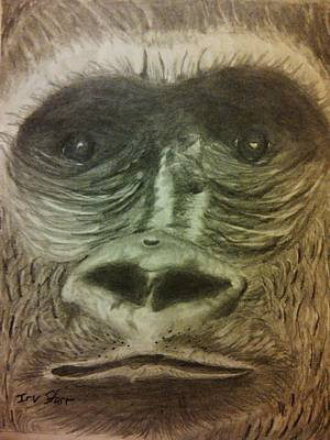 Cartoons Tees - Gorilla In The Zoo by Irving Starr