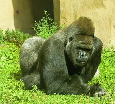 Photograph - Orangutan by Irina Afonskaya