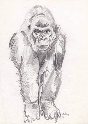 Animals Drawings - Gorilla by John Keaton