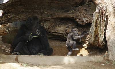 Photograph - Gorilla Mother Baby 1 by Phyllis Spoor