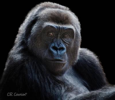 Photograph - Gorilla Portrait by CR  Courson