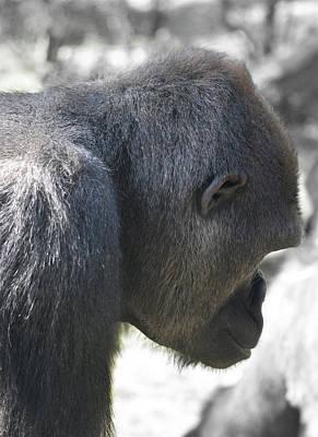 Photograph - Gorilla Profile by Joseph Hedaya